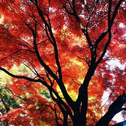Фотообои Осень | арт.2374