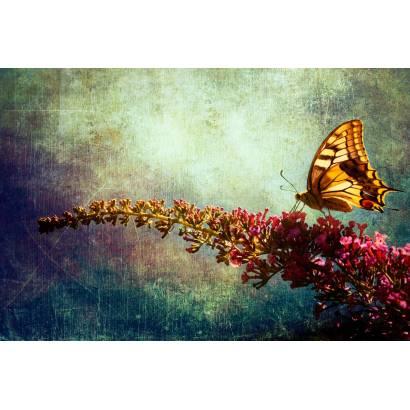 Фотообои Бабочка | арт.2724