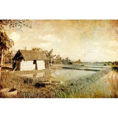 Фотообои Рисовое поле | арт.2725