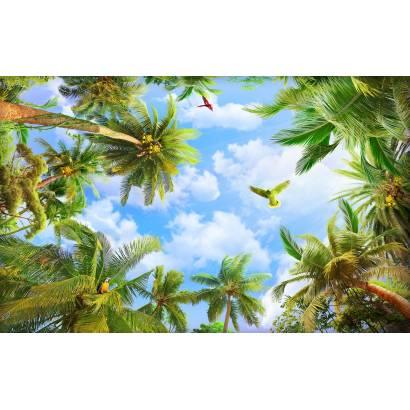 Фотообои Под тропическими пальмами | арт.307