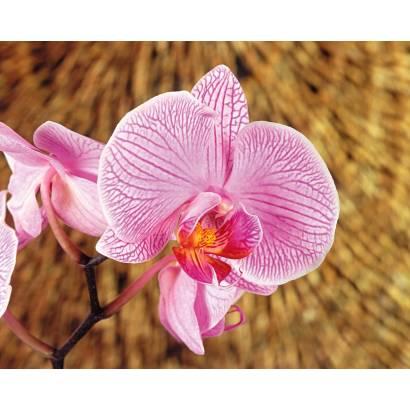 Фотообои Орхидея | арт.2810