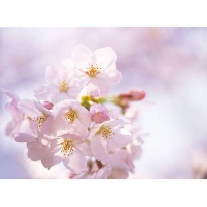 Фотообои Сакура | арт.28103