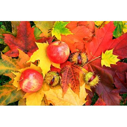 Фотообои Осень | арт.28106