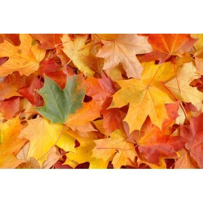 Фотообои Осень | арт.28128