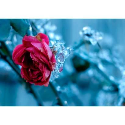 Фотообои Розы | арт.28129