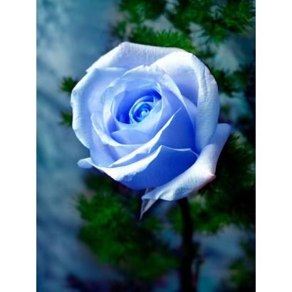 Фотообои Розы | арт.28137