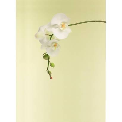 Фотообои Орхидея | арт.28145