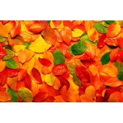 Фотообои Осень | арт.28146