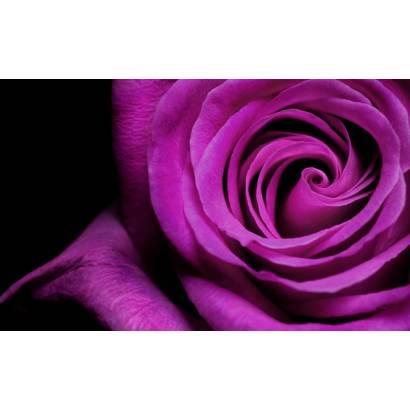 Фотообои Розы | арт.28150