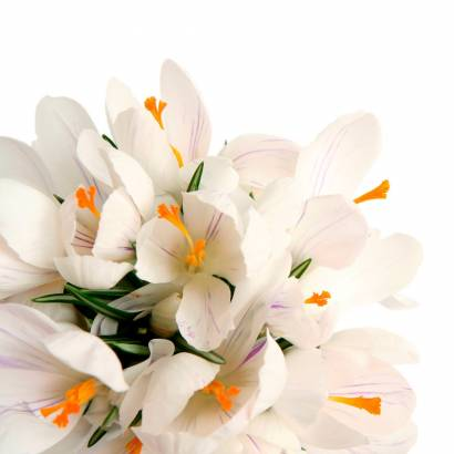 Фотообои Цветы   арт.28154