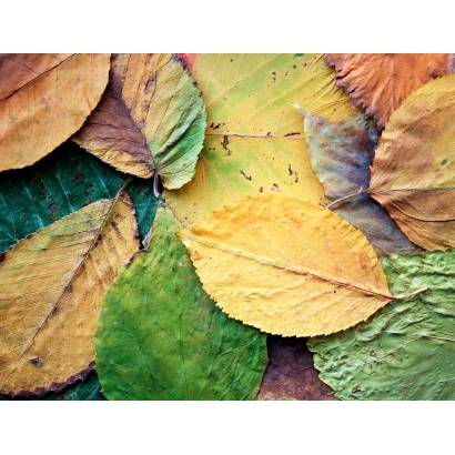 Фотообои Осень | арт.28161