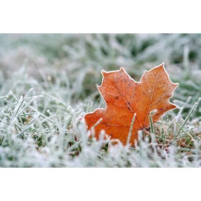 Фотообои Зима | арт.28175