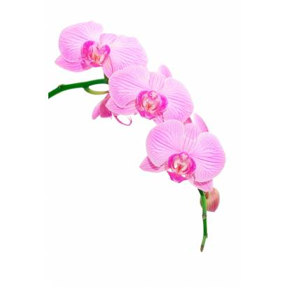 Фотообои Орхидея | арт.28187