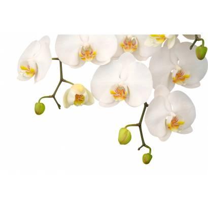 Фотообои Орхидея | арт.28193
