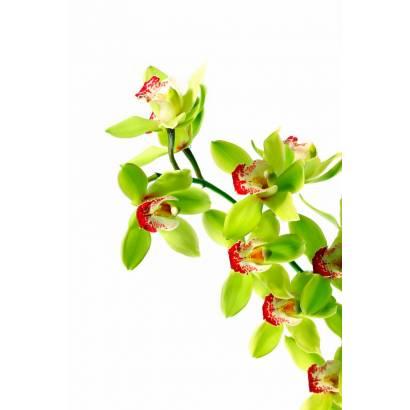 Фотообои Орхидея | арт.28194