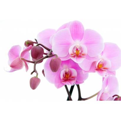 Фотообои Орхидея | арт.28195