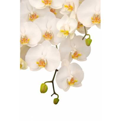 Фотообои Орхидея | арт.28200