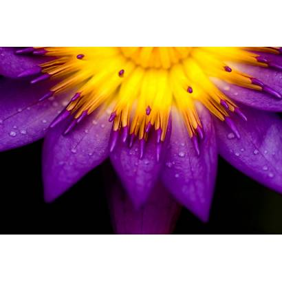 Фотообои Цветы | арт.28202