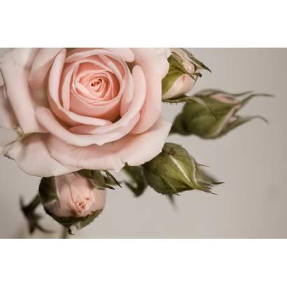 Фотообои Роза | арт.28207