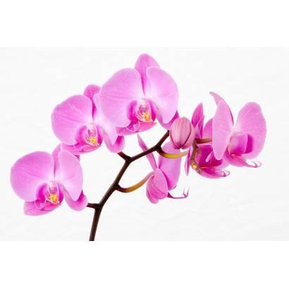 Фотообои Орхидея | арт.28213