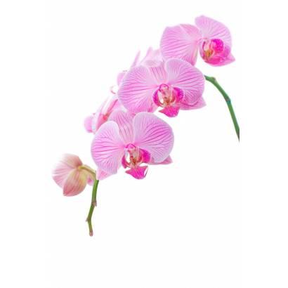 Фотообои Ветка орхидеи | арт.28216