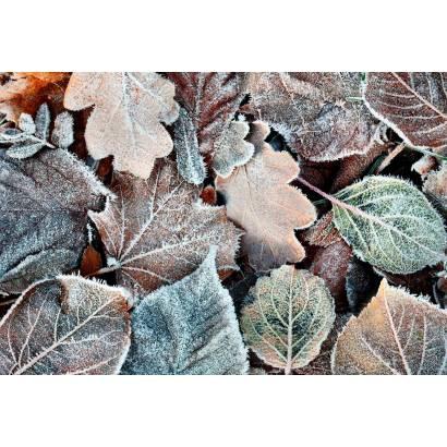 Фотообои Листья | арт.28223
