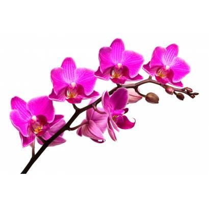Фотообои Орхидея | арт.28233