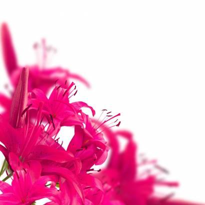 Фотообои Цветы   арт.28246