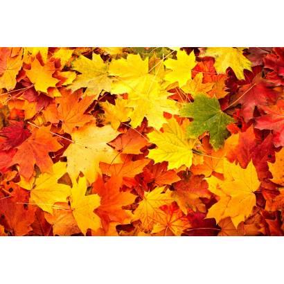 Фотообои Осень | арт.28251