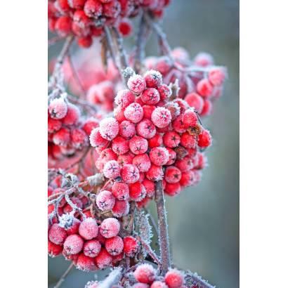 Фотообои Зима | арт.28261
