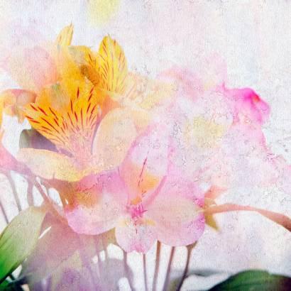 Фотообои Цветы   арт.28272