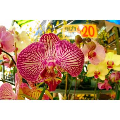 Фотообои Орхидеи | арт.28273