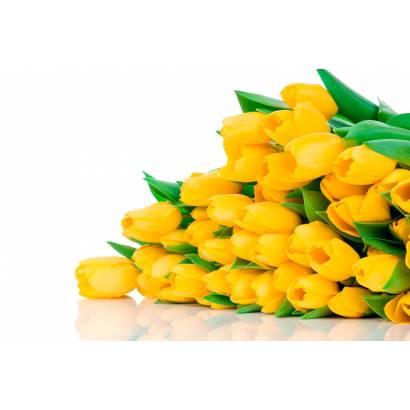 Фотообои Букет тюльпанов | арт.28279