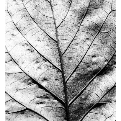 Фотообои Лист | арт.28283