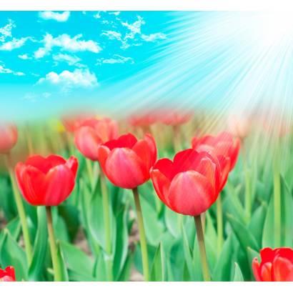 Фотообои Тюльпаны | арт.28285