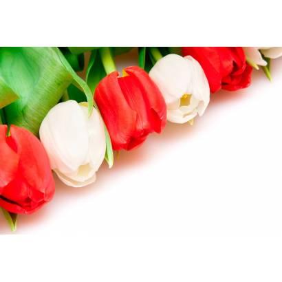 Фотообои Тюльпаны | арт.28288