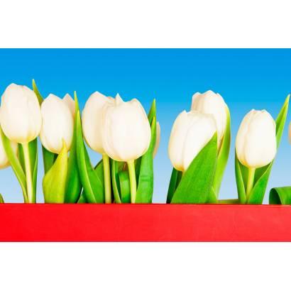 Фотообои Тюльпаны | арт.28289