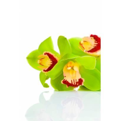 Фотообои Орхидея | арт.28299