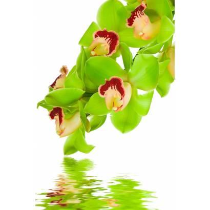 Фотообои Орхидеи | арт.28301