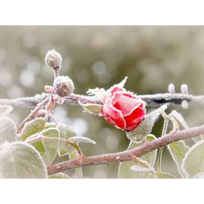 Фотообои Зима | арт.28306