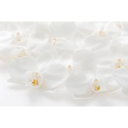 Фотообои Орхидеи | арт.28307