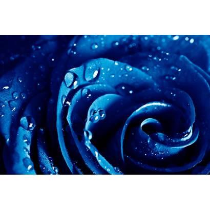 Фотообои Синяя Роза | арт.28308