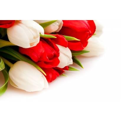 Фотообои Тюльпаны | арт.28312