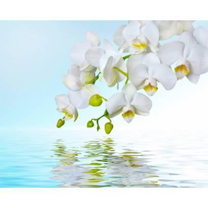Фотообои Орхидеи | арт.28313