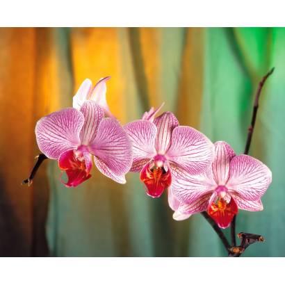 Фотообои Орхидея | арт.2832