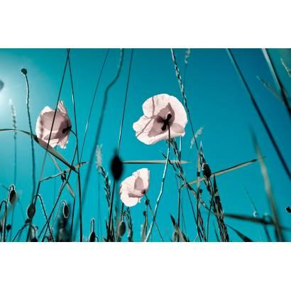 Фотообои Полевые Цветы | арт.28328