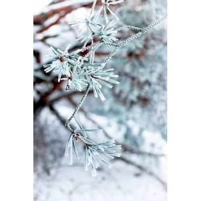 Фотообои Зима | арт.28329