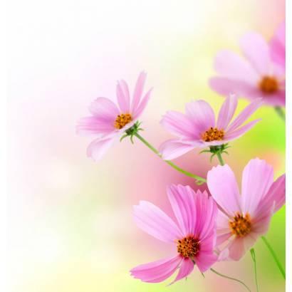 Фотообои Полевые Цветы | арт.28339