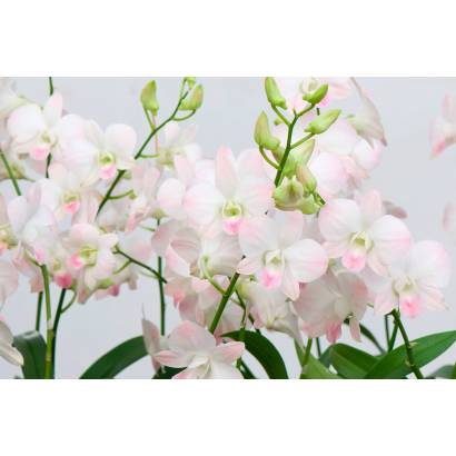 Фотообои Цветок | арт.28352