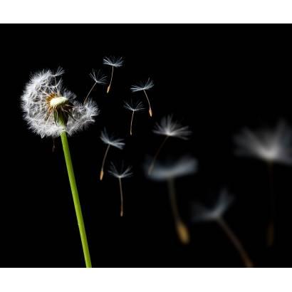 Фотообои Одуванчик | арт.28353